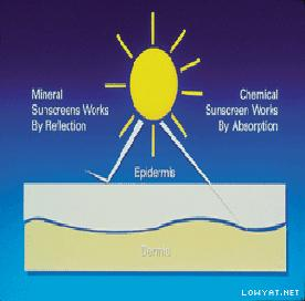 Mineral (Physical) vs Chemical Sunscreen.
